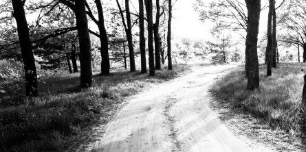 Enmark_AboutUs_4_trees